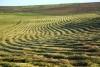 Plow land after the harvest - After harvest