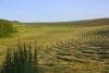 A plow land after harvest - Plow land