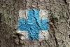 Tourist sign on a tree - Blue cross