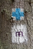 Virgin Mary pilgrimage symbol with blue cross on a tree - Tourist symbols