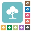 Leafy tree white flat icons on color rounded square backgrounds - Leafy tree rounded square flat icons
