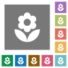 Flower flat icons on simple color square backgrounds - Flower square flat icons