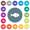 Fish flat white icons on round color backgrounds - Fish flat white icons on round color backgrounds. 17 background color variations are included.
