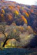 Autumn mountain forest in the Eastern Carpathians  - Autumn forest in the mountains