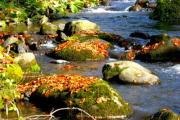 A forest creek flowing over stones - Forest Creek