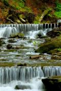 A series of small waterfalls on a forest creek. - Waterfalls in the forest