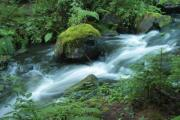 A water-course with long exposure in a lush green environment - A water-course with long exposure