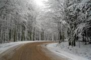 Highway in the winter forest - Road among snow-bound trees