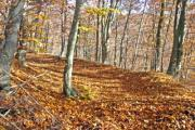 Autumn leaves cover the forest path - Autumn walk in the forest
