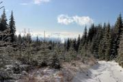 Snowy pine trees in the mountains with blue skies and clouds. - Winter in the mountains