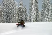 Man on a snowmobile among huge pine trees - Man on a snowmobile