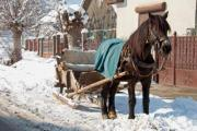 A horse-drawn wooden sleigh in the street - A horse-drawn sleigh