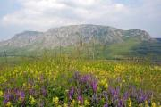 A spring meadow with a rocky mountain in the background - Spring meadow
