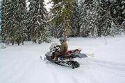 Man on a snowmobile among huge pine trees - Man on a snowmobile