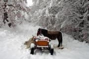 A horse carriage on a forest path in winter - A horse carriage in winter