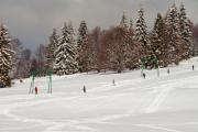 Ski slope along huge pine trees with skiers - Ski slope