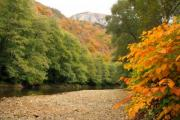 Autumn wood with river and a mountain in the background - Autumn wood