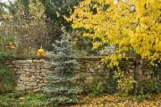 A garden in autumn with a jack-o-lantern - Autumn garden
