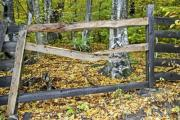 Closeup of a fence next to an autumn forest - Wooden fence