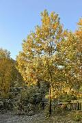 A garden in autumn with big, colorful trees - Autumn trees