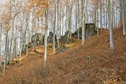 Beech forest in autumn with big rocks - Autumn in the forest