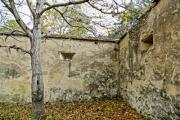 Dilapidated garden walls with a tree - Old walls