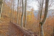 Autumn forest on a mountain - Autumn wood