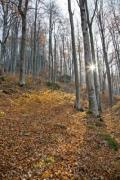 Sunny day in the autumn forest - Autumn forest