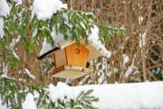 Two great tits (Parus major) at a bird feeder in winter - Bird feeder
