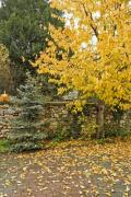 Detail of a garden in autumn - Autumn garden