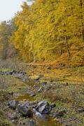 Autumn trees with a little rocky creek in front - Autumn forest