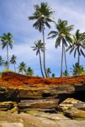Trees on the Comorre Islands - Palmtrees