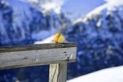 Apple on a wooden rail in the mountains - Apple on the rail