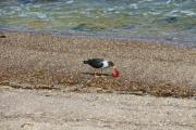Bird eating on the seaside - Bird catches