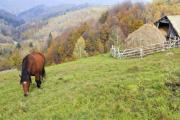 A brown horse grazing on the mountain pasture - Lonely brown horse