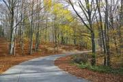 A road in the autumn wood - Autumn road