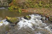 Small rapids with big stones - Stream rapids