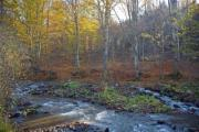 Small stream in the picturesque autumn forest - Small autumn river