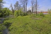 Green riverbank with lot of plants - Lush green riverbank