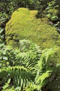 Leaves of fern and a layer of some moss on the rock - Mr. Moss and Mrs. Fern
