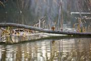 A bird is having a rest on a branch in the lake. - Having a rest