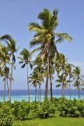Palm trees on Grand Comore's seaside - Palm trees