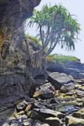 Palm trees growing from the rocky wall at the ocean - Tough plam tree