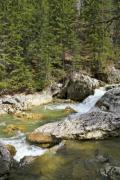 A mountain river rushing among pines and big rocks - Mountain river