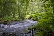 A rush river in the wood - Forest river