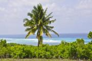 Large palm tree at the beach - Lonely palm tree