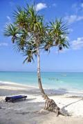Palm tree and sunbed on a beautiful beach - Your sunbed