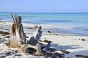 Broken tree trunk on a beautiful sandy beach - Broken tree trunk
