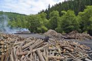 View of a charcoal pile in the pine forest - Charcoal pile