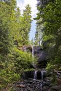 A small waterfall in a pine forest - Forest waterfall